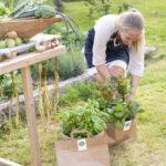 Grönsakskasse